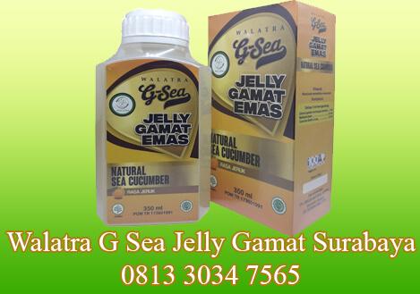 walatra g sea jelly gamat emas surabaya